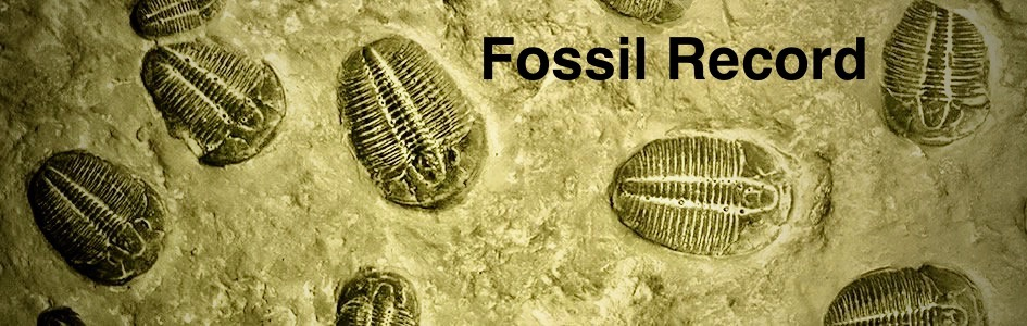 Evolution and The Fossil Record